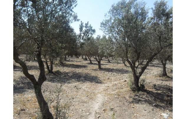 Beau terrain sis Chatt Meriem Ouled Ben zina 4042Akouda Sousse