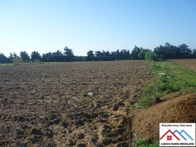 Terrain agricole de 11000 avec titre bleu