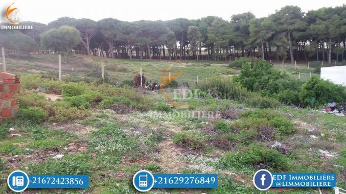Réf 3027: Terrain 500 m² à Nadhour Bizerte