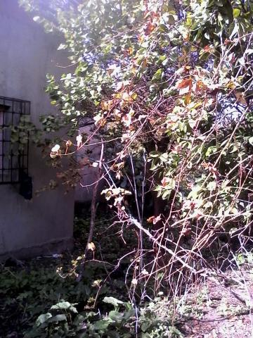 maison tarchoun