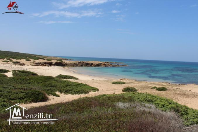 52 hectares pieds dans l'eau à haouaria