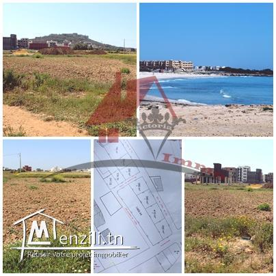 3 lots de terrain à Kélibia -Mansoura 2