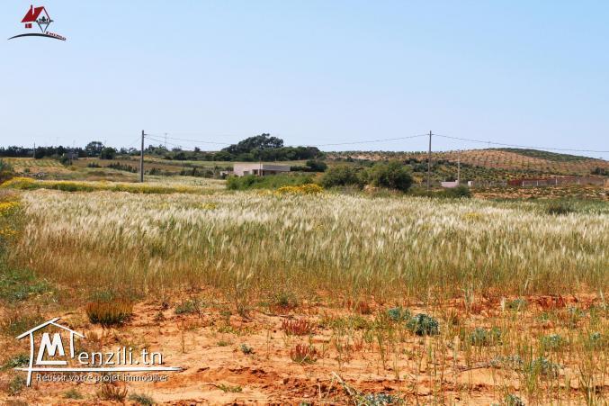 700 m² à Chraf El Haouaria à vendre
