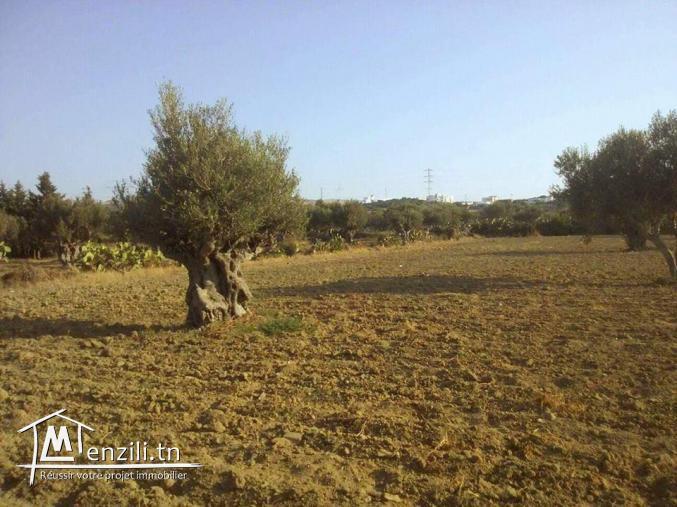 Joli terrain à vendre à Bizerte