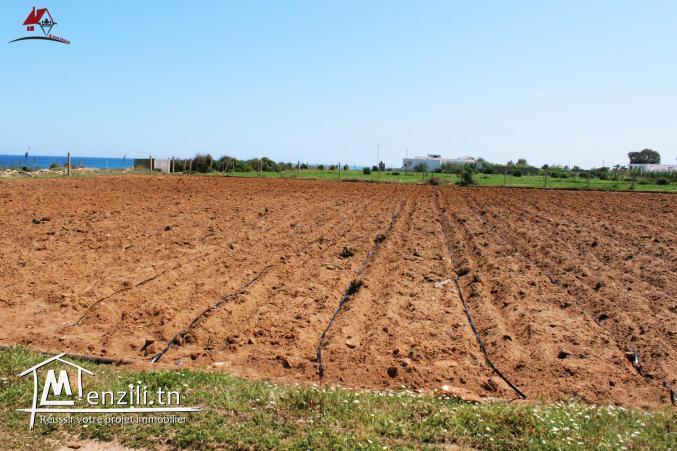 des hectares à Dar Allouch