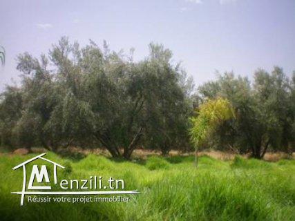 Terrain à Bizerte