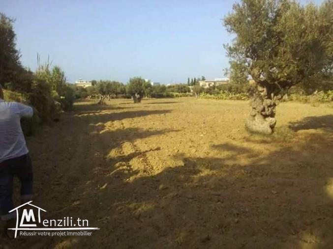 Un joli terrain à ne pas rater à Bizerte