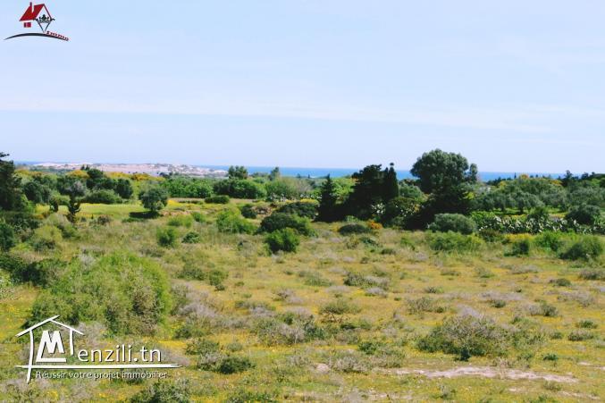 أرض تبلغ مساحتها 1035 الم² في حمام الغزاز - قليبية
