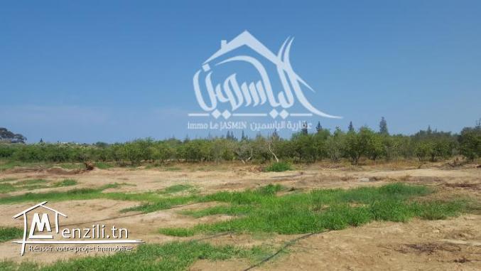 Des terrains agricole à Akouda