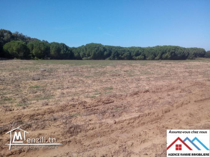 Terrain agricole sania sakwii de 7 hect et 3471m2