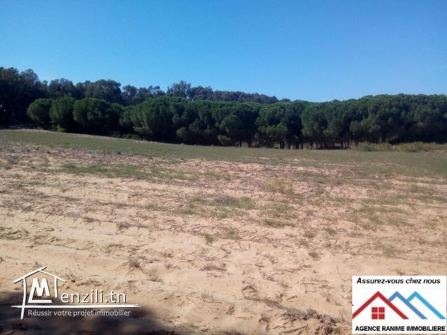 Terrain agricole sania sakwii de 1 hect 8000m2