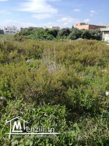 terrain a vendre mosquet bilel kelibia
