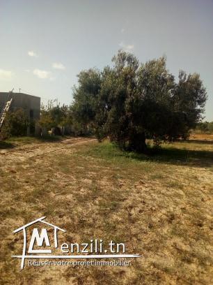 للبيع عدد18زيتونة في واد لعشاش بين طريق تونس والمهدية