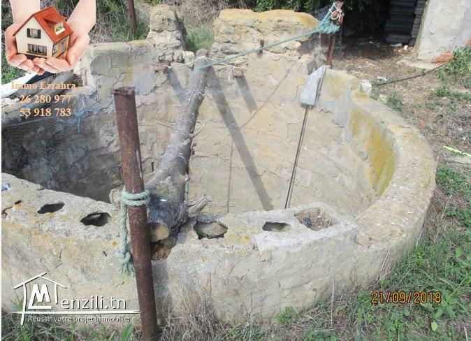 سانية للبيع في دار علوش (حمام الغزاز) تمسح 2 هكتار
