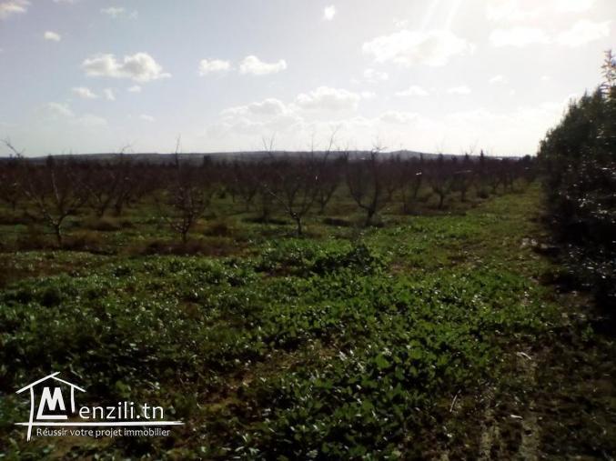 Ferme de 58 ha situé sur bord de route