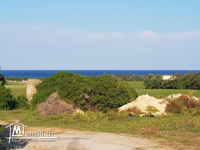 vente des lots 200 m² à la plage kerkouane (kélibia)