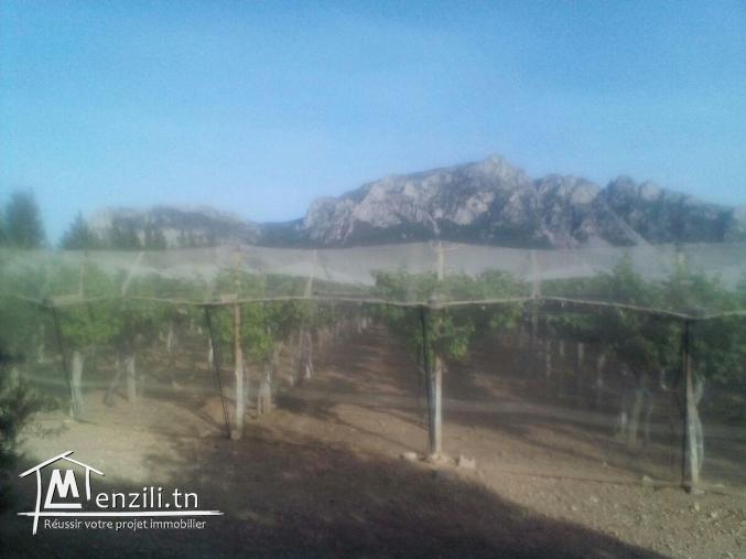 Terrain agricole 1 ha Morneg