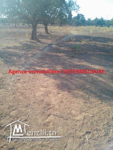 Un terrain  à Njajra - MSAKEN