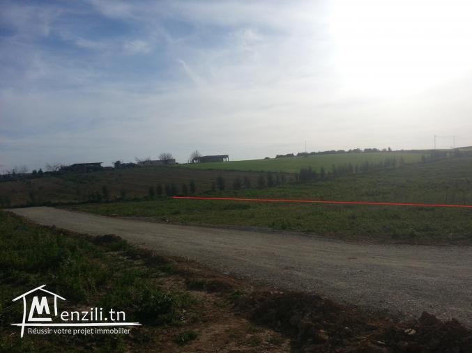 للبيع قطع اراضي مقسمة 120د/م (Forsaa)