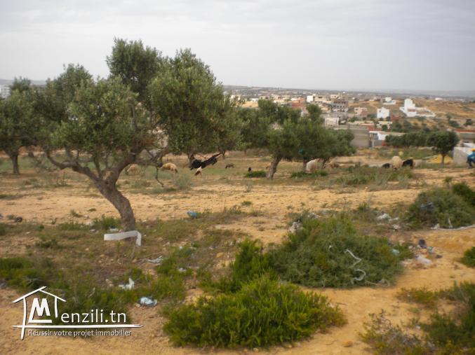 Un terrain de 2500 m² à 70 DT le m² à El Besbessia
