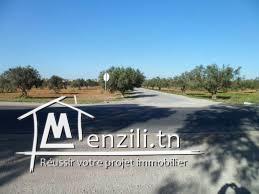 Terrain de 46 790 m² à directement sur la GP1 de Bouficha à 702 MDT