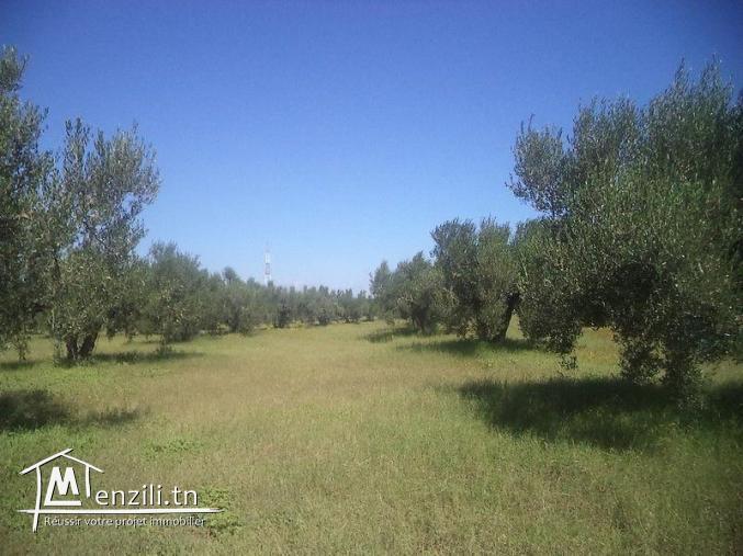 Un terrain de 16600 m² à 150 MDT à Essalloum
