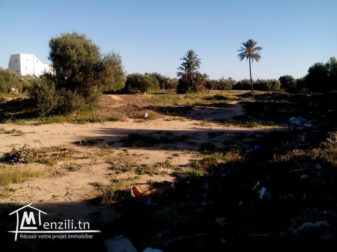 Terrain 1100m2 Midoun Jerba Direct Particulier