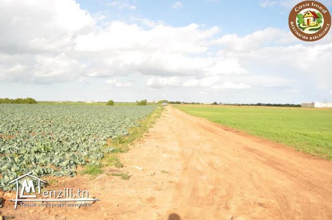 Magnifique terrain d'agriculture