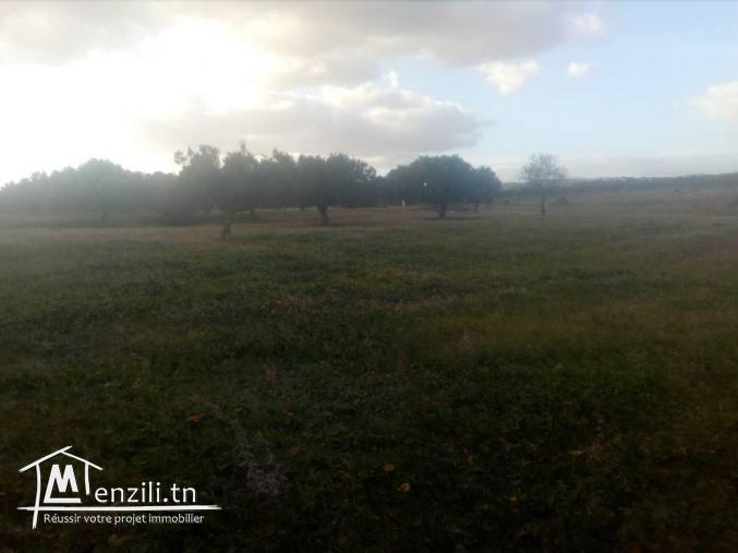 hectare 7 min de hamamet sud