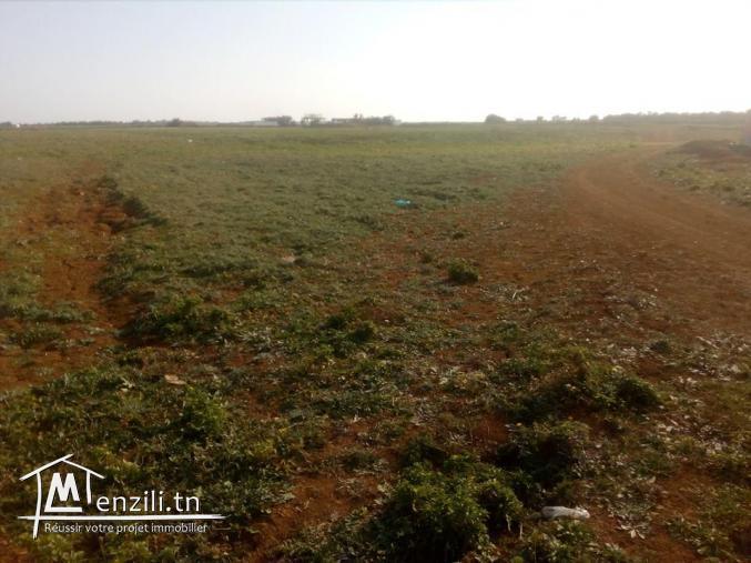 Des lots de terrain a 5 min de Yassmin Hamamet