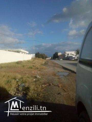 terrain surnla route principal sidi hamed hammamet