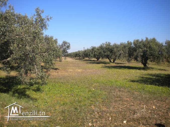 Un terrain de 1 ha à 150 MDT à Essalloum