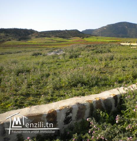 Un terrain de 2563 m² aux environs de Hammamet à 128 MDT