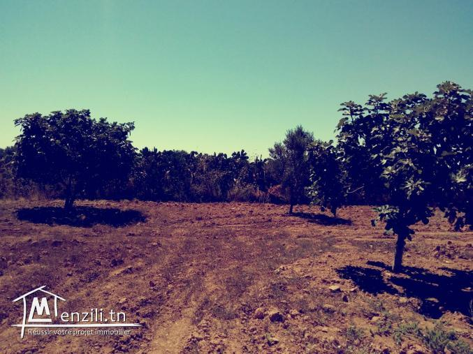 A vendre : Terrain Agricole (7 Hectares)