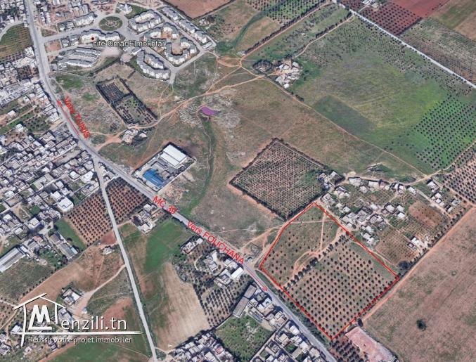 Terrain à Sidi Hassine pour promoteurs