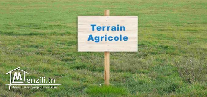 #VENTE: #Un_Terrain_d'#une_superfcie_200_mettre#à_ghrabi_hammem_sousse