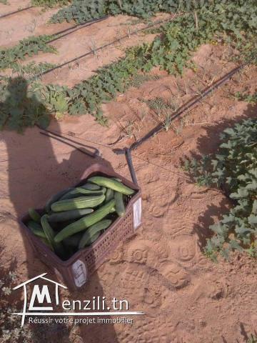 terrain agricole de 250 hectares