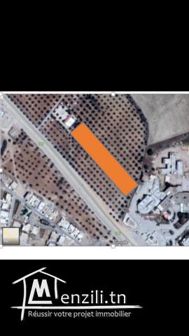Vente d'un terrain à Zaghouan ville