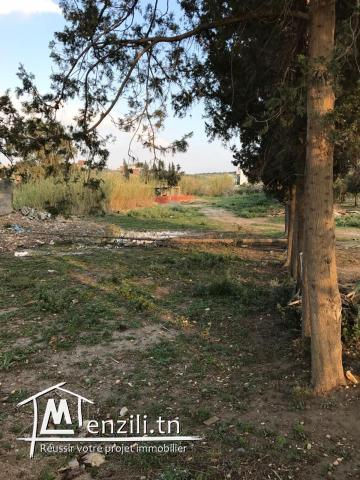 Terrain à Zaghouan ville