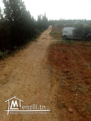 terrain de  3000 m² à hammamet