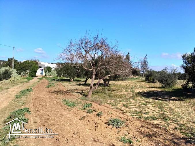 terrain de  4500 m² à la compagne de hammamet