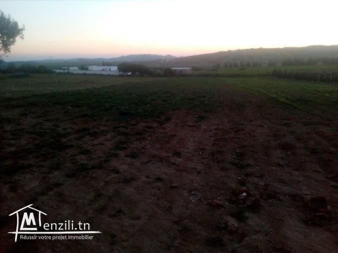 terrain de 6200 m² à hammamet