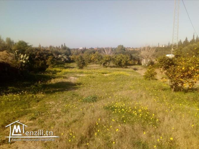 terrain à lan compagne de hammamet nord de 1000 m²