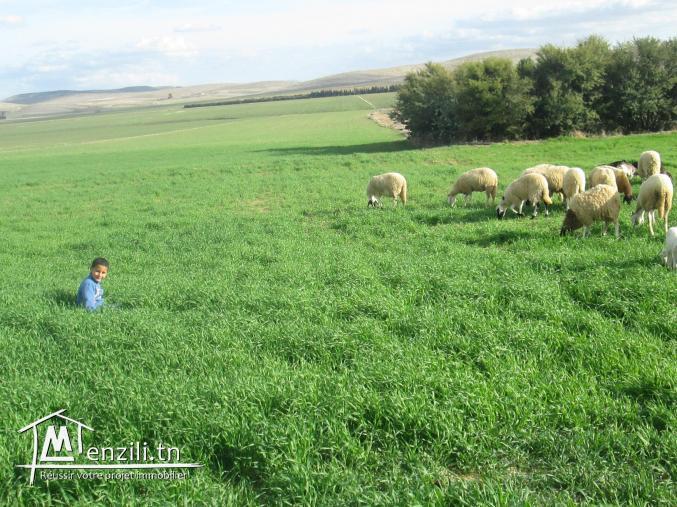 Ferme agricole a El Houdh, Tajerouine