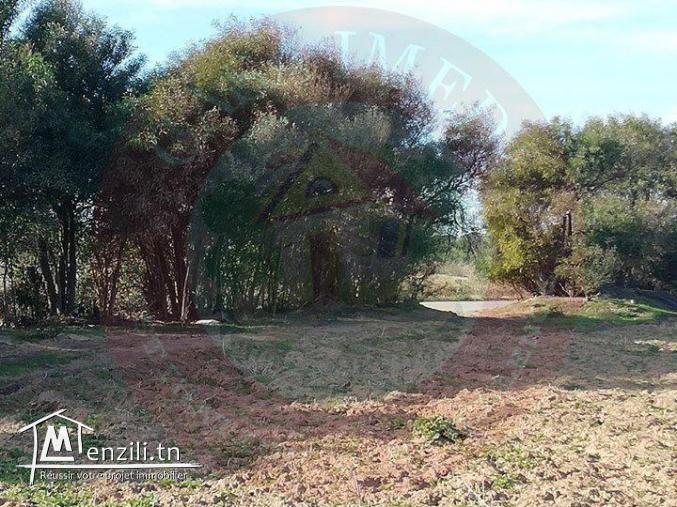 un terrain à vendre à haouaria pour plus d'info 26305654