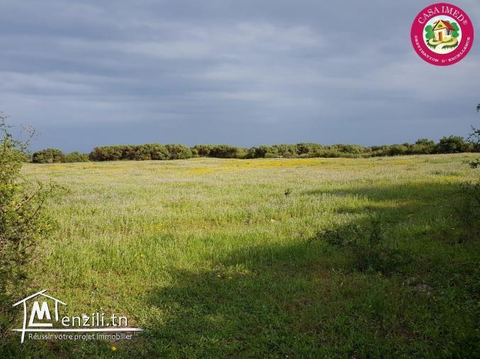 un terrain à vendre à kerkouane pour plus d'info 26305654