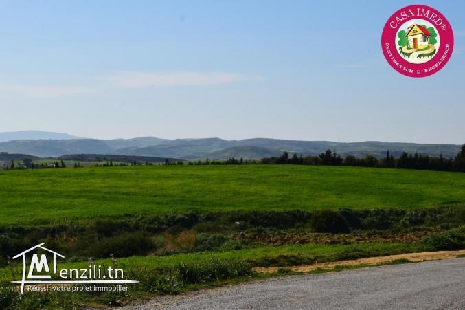 un terrain a vendre à kélibia menzel brahim pour plus d'info 26305654
