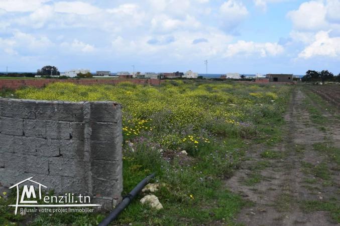 terrain a vendre à kerkouane kelibia