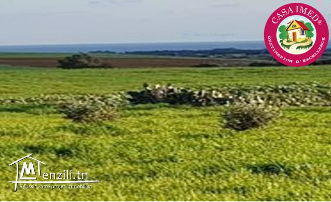 promotion : terrain a vendre à kelibia a un prix choc 21095592