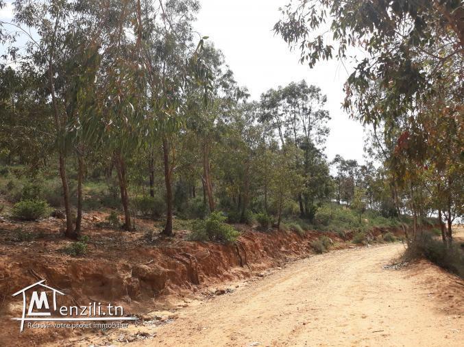 hectares de terrain terrain forestier avec titre foncier